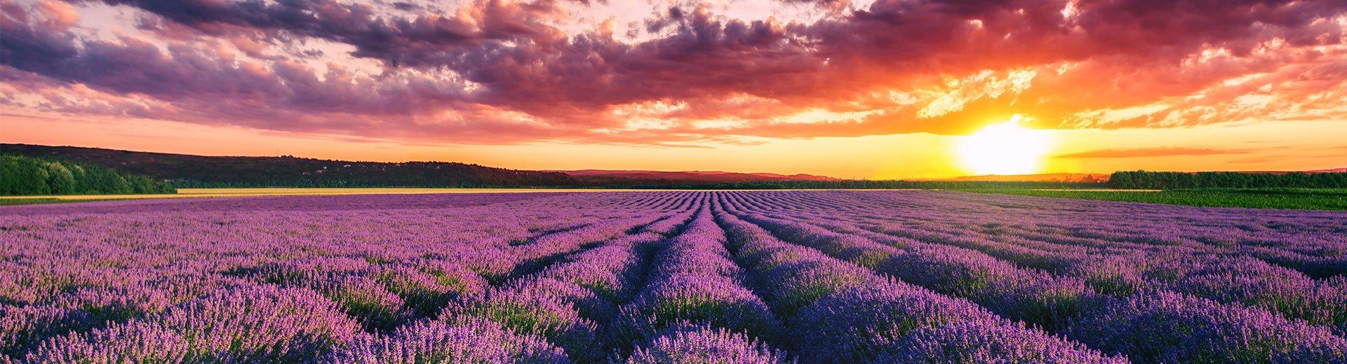 Okładka artykułu Znaczenie i odbiór barwy fioletowej — Kolory w projektowaniu