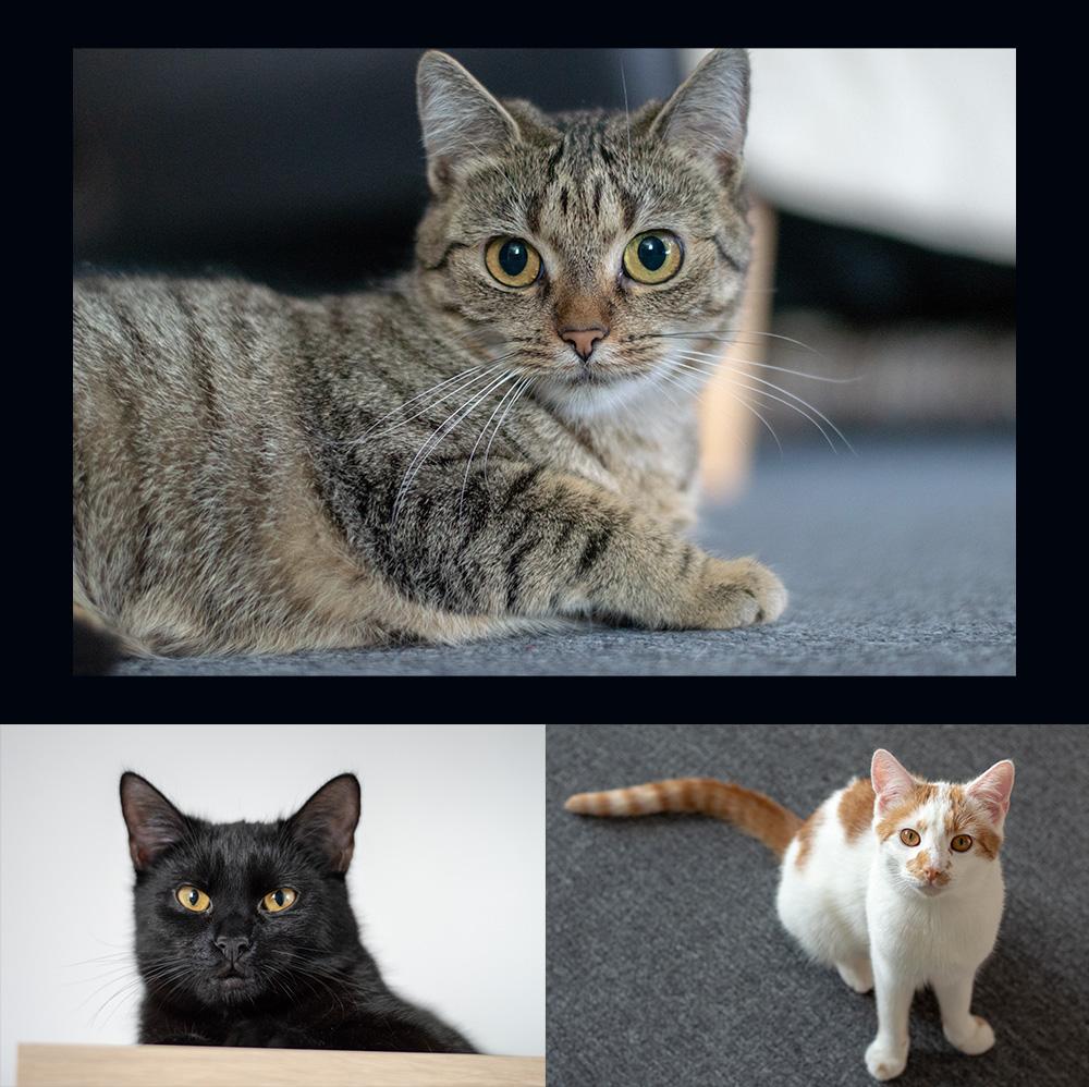 Koty redakcyjne
