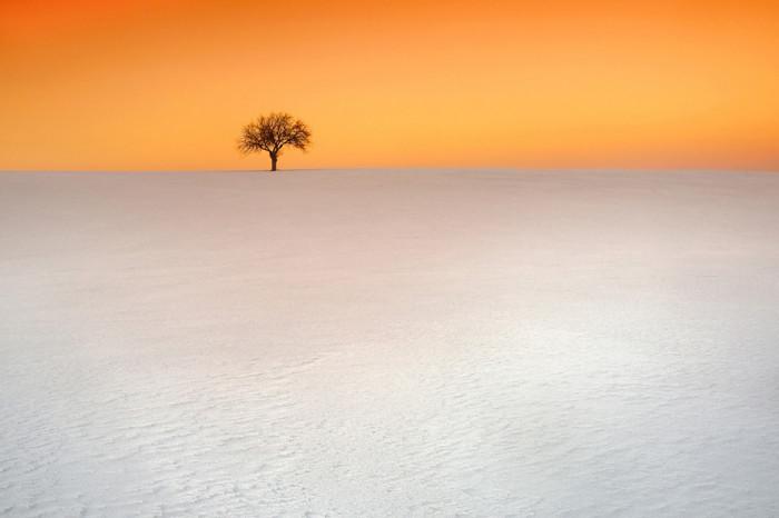 Winter tree © Lukasz Jaskowiak