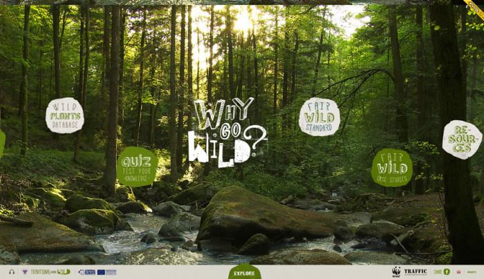 Wykorzystanie zielonego w kolorze lasów, sprawia, że momentalnie strona kojarzy się nam z dziką naturą