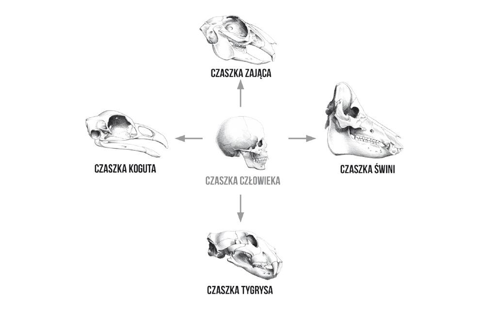 Budowa czaszki potwora - concept art